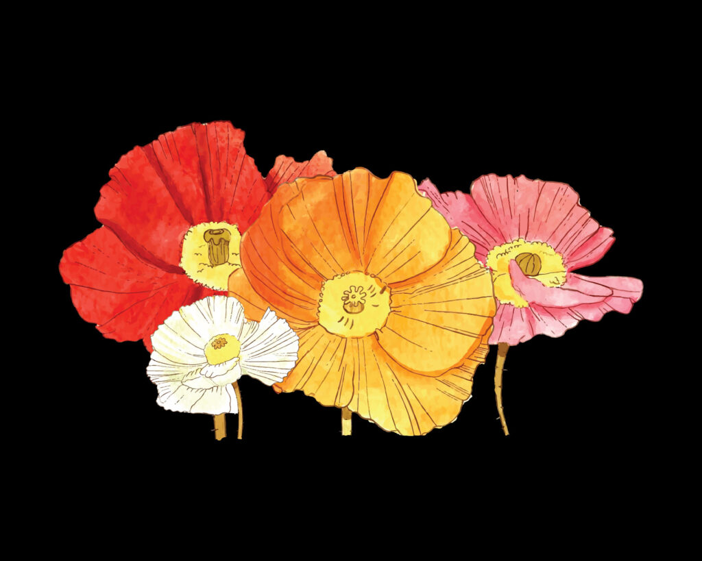 Multi-colored poppies on black fabric provide a good example of DTG printing.